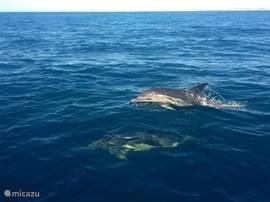 Boot tochtje kuststrook voor huis met Wildwatch (Ferragudo)