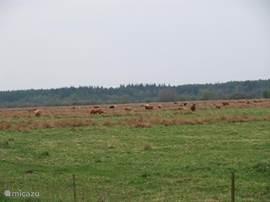 Natuurgebied Doldersum