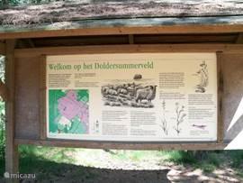 Natuur gebied Doldersum