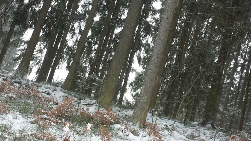 De mooie besneeuwde Oostenrijkse bossen (gemaakt in de winter)