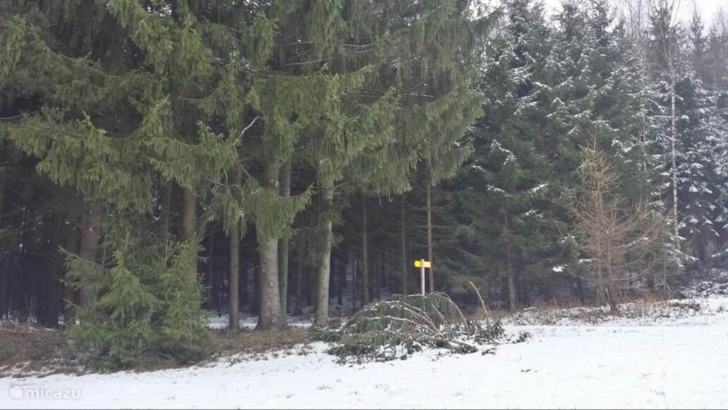 De Oostenrijkse bossen in de winter