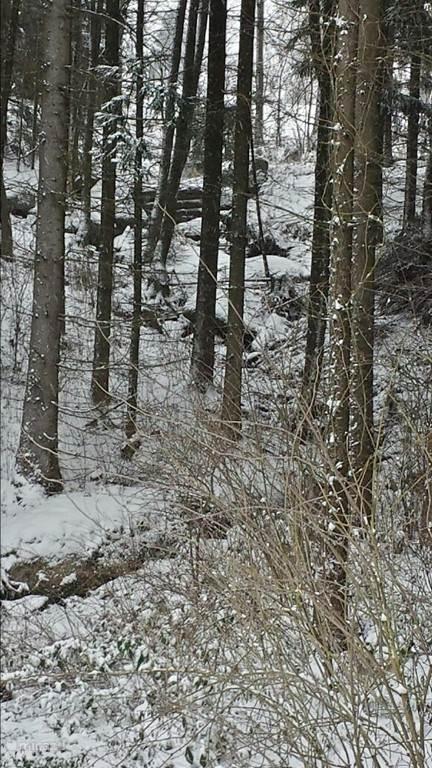 Een bergstroom net naast het park (balkonuitzicht in de winter)