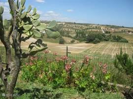 Prachtig uitzicht vanuit de achtertuin met grasveld en fruitbomen.
