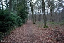 Direct vanuit de achtertuin het bos in!