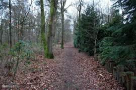 Eindeloos wandelen en fietsen in het bos. U wandelt in 10 minuten naar de Ermelosche heide!