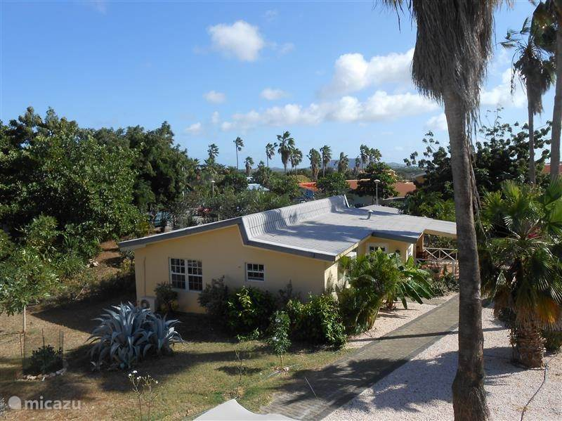 Duiken / snorkelen, Curacao, Curacao-Midden, Koraal Partier, villa ANKATEAM Villa  V36
