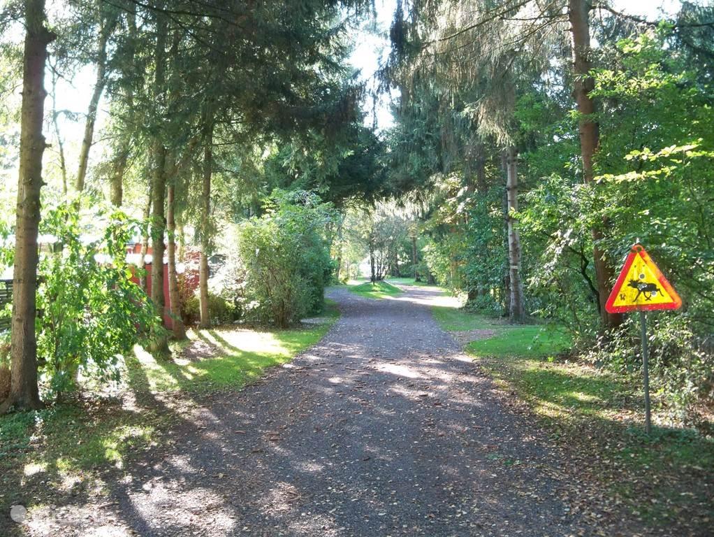 Toegangsweg naar de verschillende terreinen op camping Padjelanta