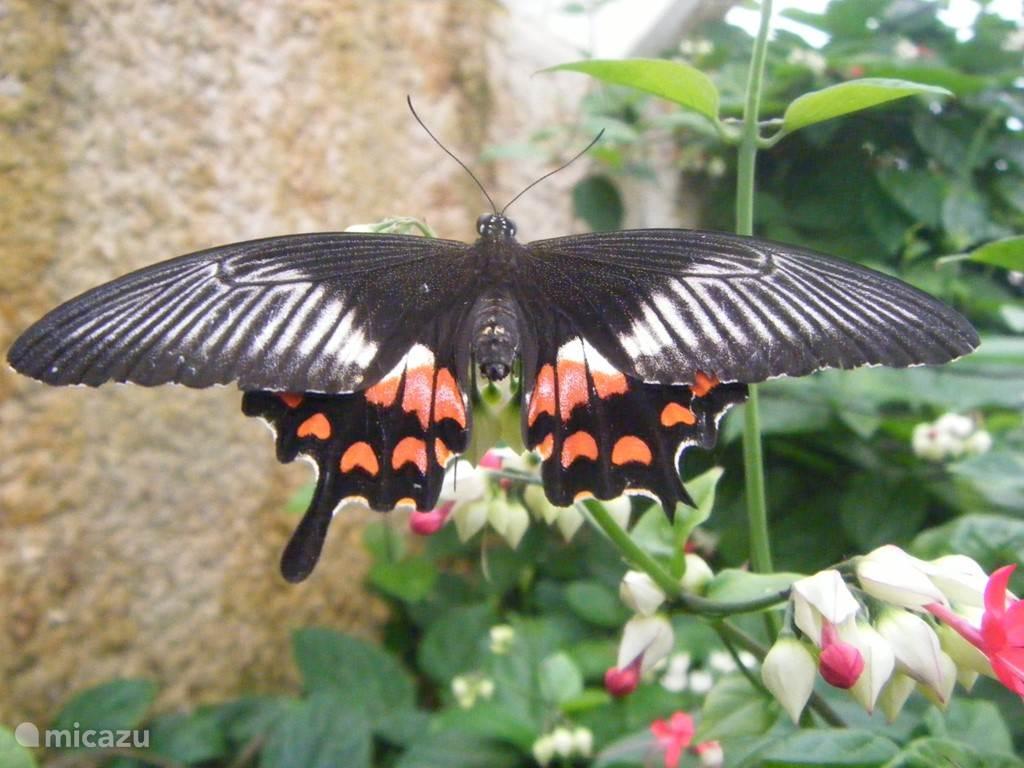 De grootste vlindertuin van Europa staat in Benalmadena. Een bezoek aan het Mariposario is dan ook de moeite meer dan waard!