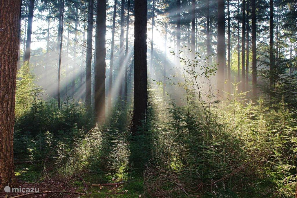 Midden in de bossen
