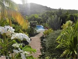 The tropical garden