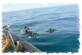 Dolfijnen op zee