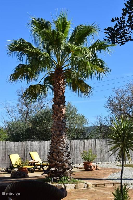 Zonnebaden onder de palmen