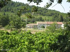 Location of the house between vineyards and woods
