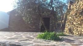 Terras met olijfbomen.