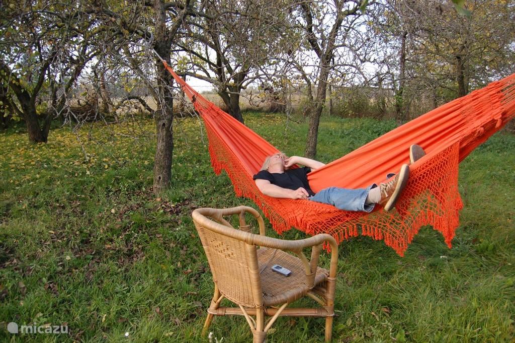 Gast Cees doet een dutje in de boomgaard