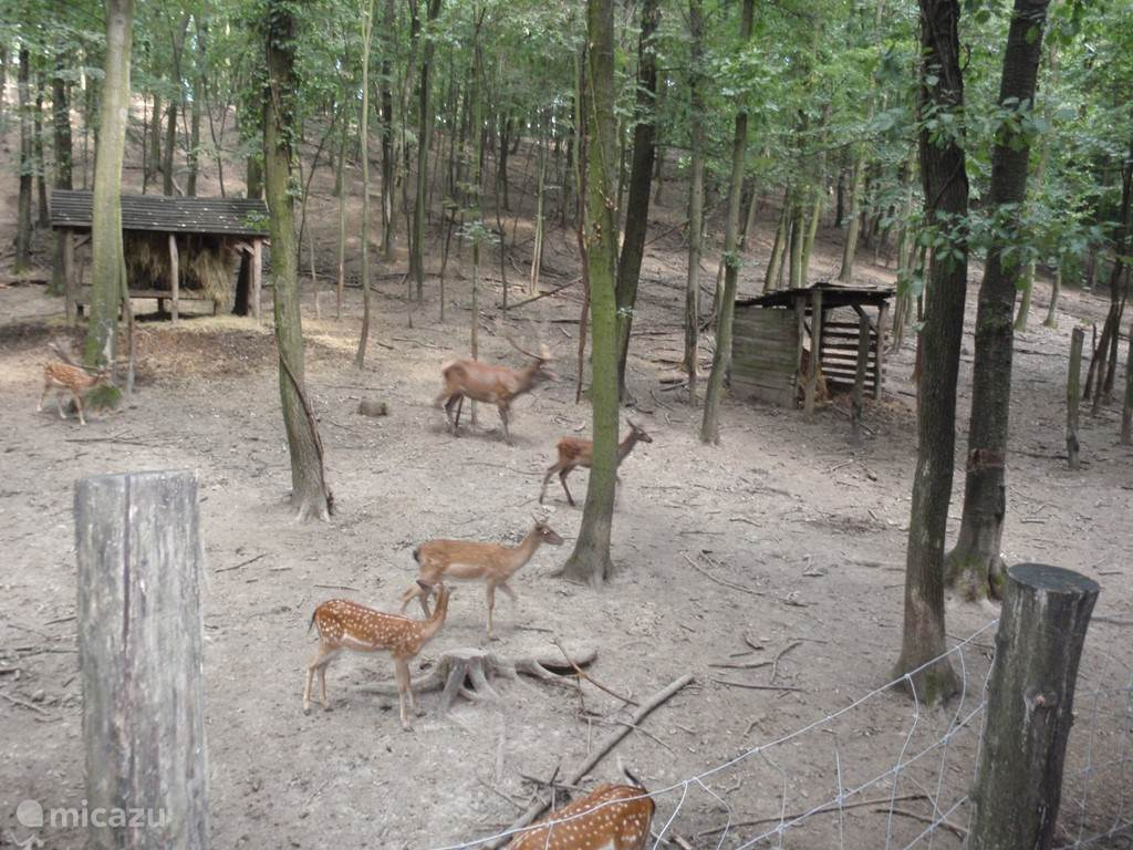 Natuurgebied Annafürdö op ca. 5 km van Szárász met herten