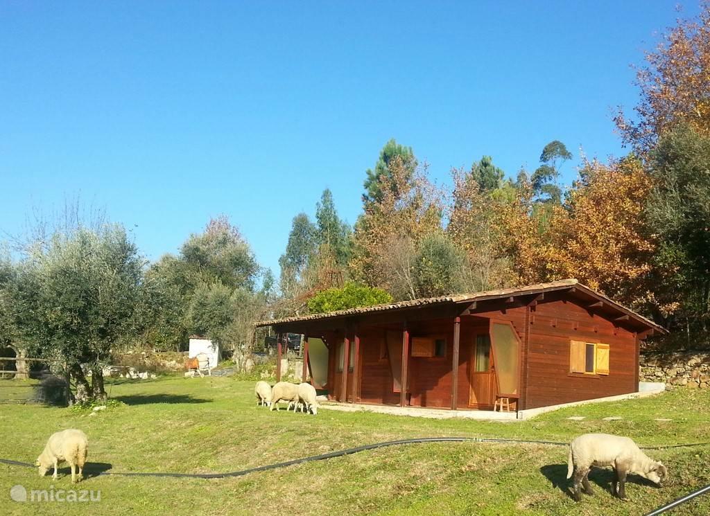 Twee kamers met eigen badkamer en veranda gelegen naast het zwembad van Quinta no Pinhal. Zie voor ligging de overzichtsfoto.