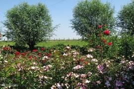 Een deel van de prachtige tuin van 1.800 m2