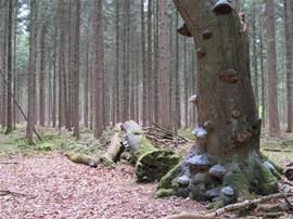 bijzonder bos