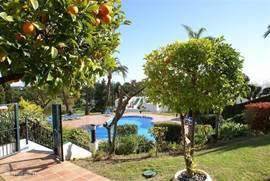 Sinaasappelbomen rondom het zwembad.