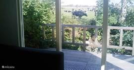 Het uitzicht vanaf de bank. De koeien komen soms even nieuwsgierig kijken.