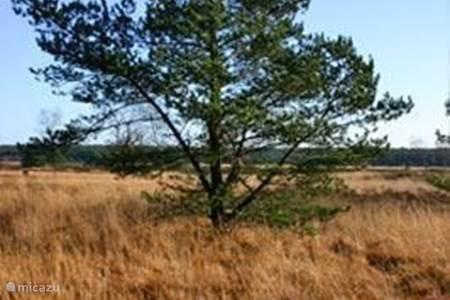 Omgeving - De Heide