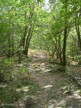 The forest (path).