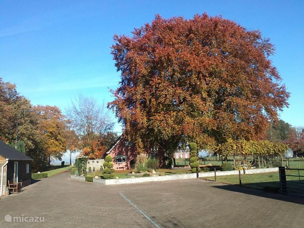 Herfst foto van de grootse Bruine Beuk