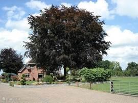Vakantieboerderij De Bruine Beuk, op deze afbeelding ziet u waar de naam vandaan komt.