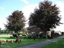 De woning gezien vanaf de voorzijde, de dieren lopen op 3 meter vanaf de woning.
