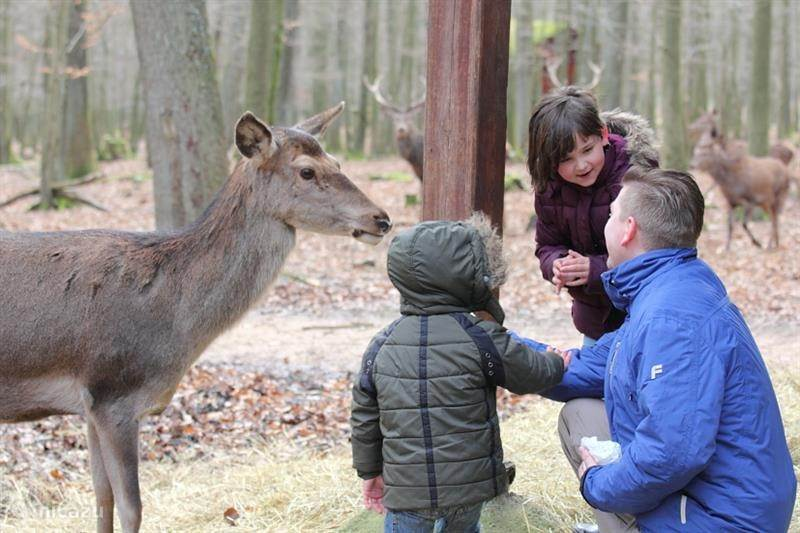 Kinderen: Wildpark Meißner