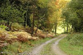In autumn you can enjoy the beautiful colors of the Hessian Wald.