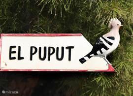 El Puput ofwel de Hop