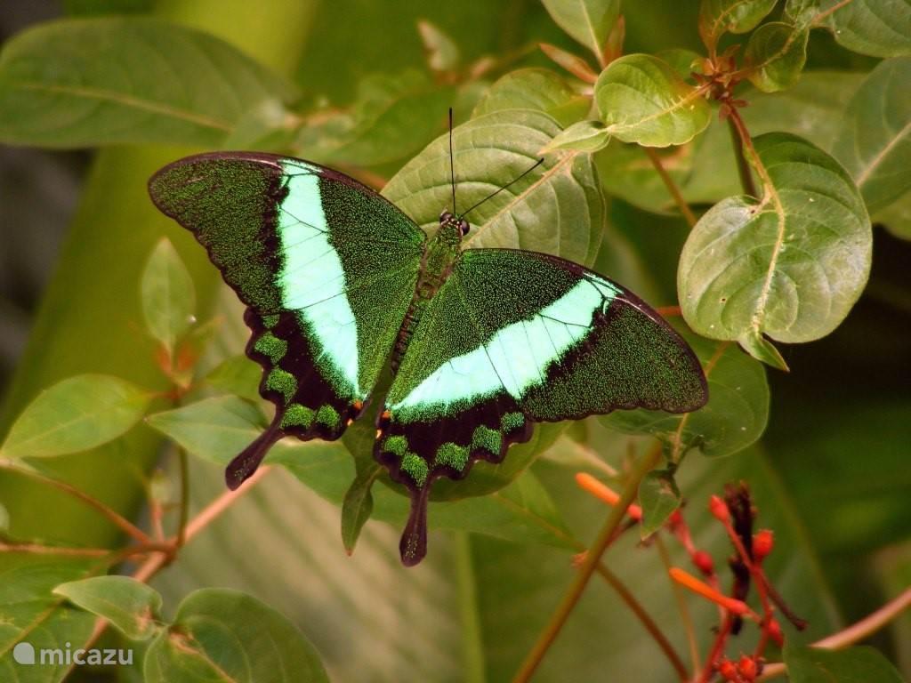 Vlinderparadijs Papillorama Havelte