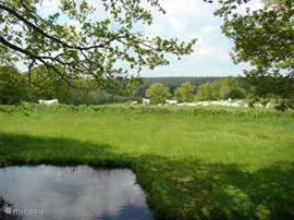 Garden and pond with a view to the neighbors, the beautiful white Charolais cows from the farmer.