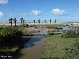Figueira da Foz ligt op ongeveer 8 km afstand, een moderne levendige badplaats met een enorm strand (het breedste strand van Europa).