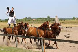 Nearby (about 3 km) you will find Bugac where horse shows are held where Hungary is famous for
