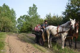 Eva can arrange a ride with a horse cart. You will see both the sweeping of the Puszta as the slightly more forested areas.
