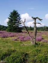 Hochheide is within walking distance. a beautiful moorland.