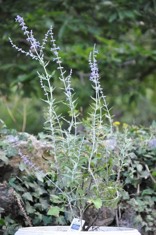bloemen bij het terras