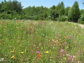 Wilde bloemen veld op de groene Krachtplaats bij het Elohim Centre.