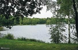 De zwemvijver op het park