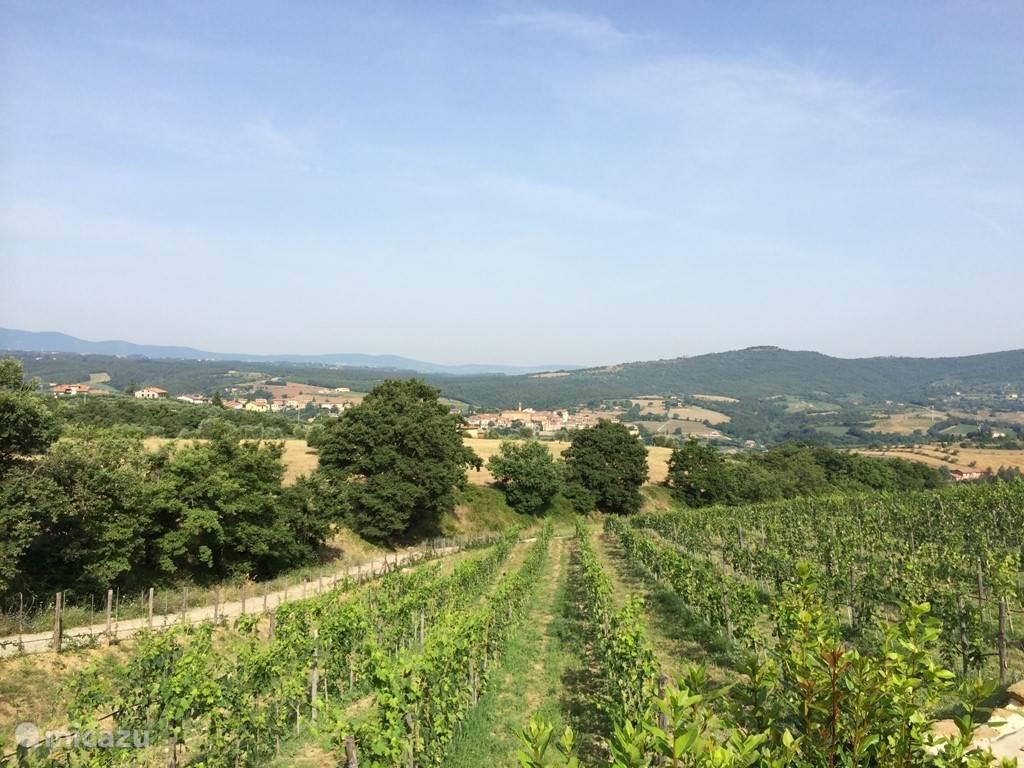 Direct grenzend aan het zwembad, een wijngaard. In de achtergrond Piegaro.