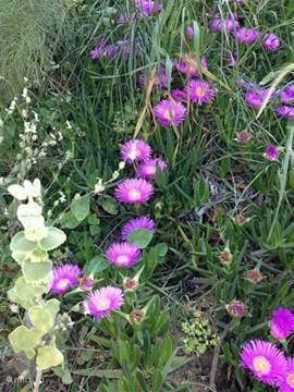 Bloemen op het park.