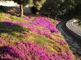 Prachtige bloemen, op het park.