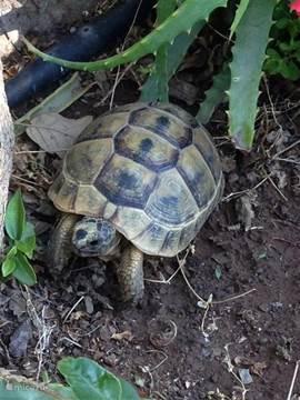 Schildpadje..