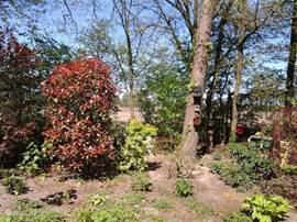 De tuin aan de achterzijde van de bungalow.