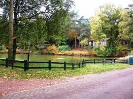 Als u het park oprijdt richting de bungalow komt u gelijk al langs deze mooie vijver. Aan natuur niet te kort.