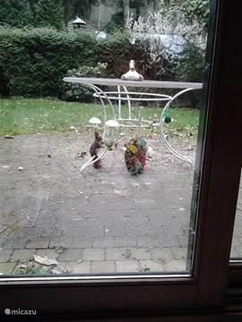 De eekhoorntjes komen in de tuin eten. Leuk om te zien!