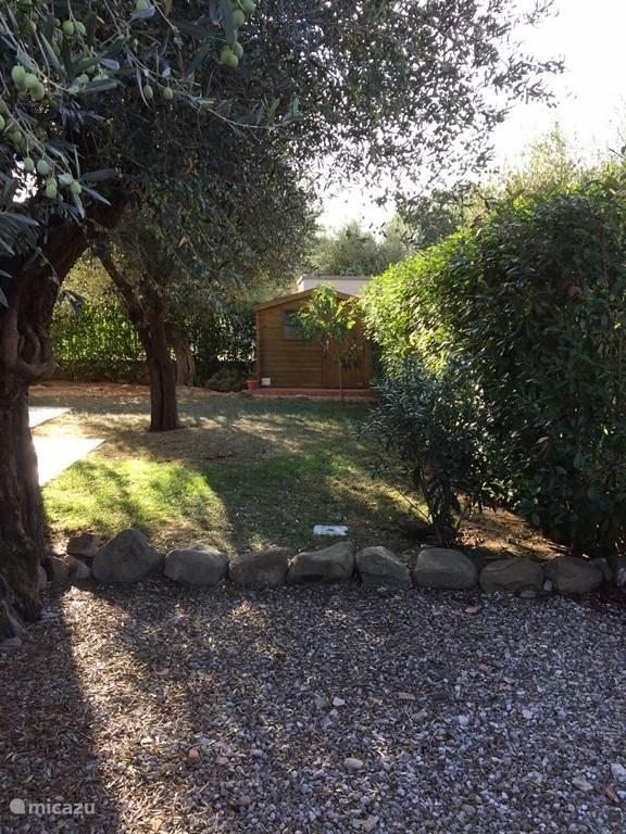 Onze mooie tuin met olijfbomen.